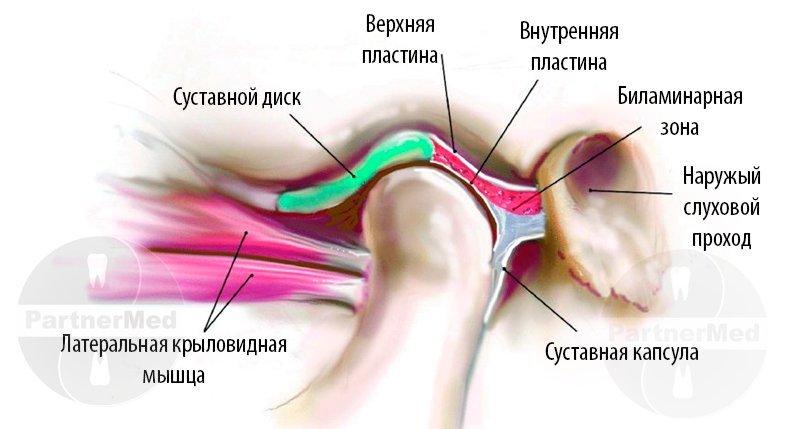 Артрит височно челюстного сустава мкб перевязка колосовидная на тазобедренный сустав